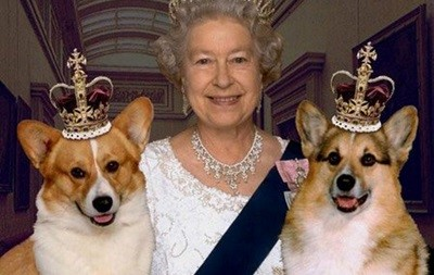 Собаки британской королевы