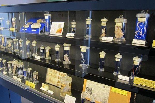 Музей паразитов